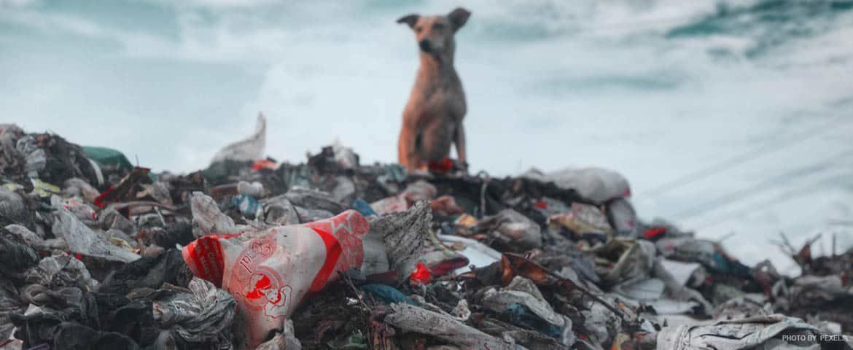 Поиск решения проблемы мусора: вред и вторичная переработка